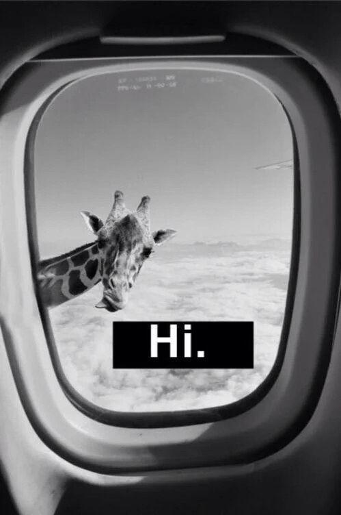 Hi!! Je suis une girafe
