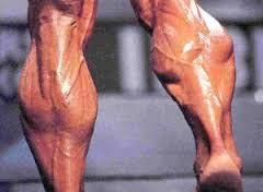 mas musculos rapidamente.