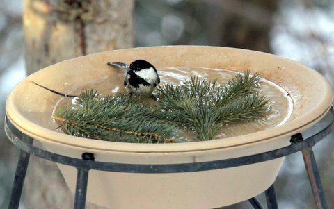7 Best Bird Baths Amp Mounting Ideas Images On Pinterest