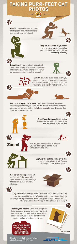 7 Steps to Taking Purfect Cat Photos [INFOGRAPHIC] | Le photographe numérique | Scoop.it