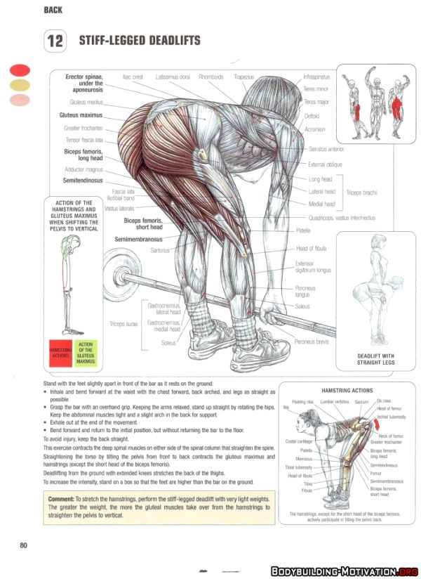 43 best CrossFit Anatomy images on Pinterest   Workouts, Health and ...
