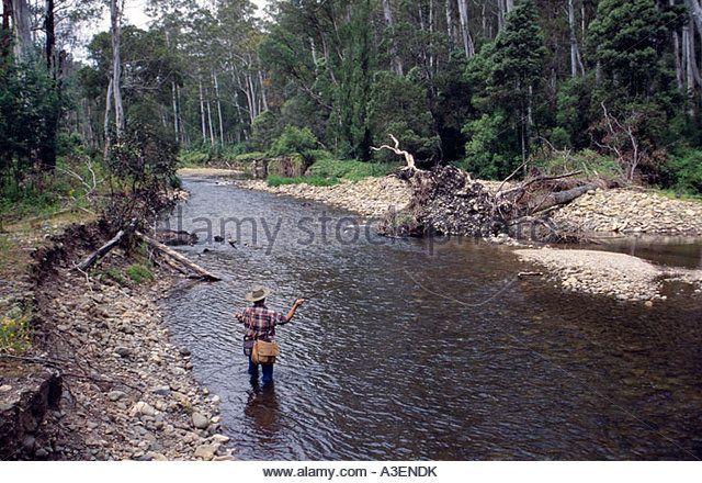 Fly fishing for trout Howqua River near Merrijig Victorian Alps NE Victoria Australia Horizontal - Stock Photo