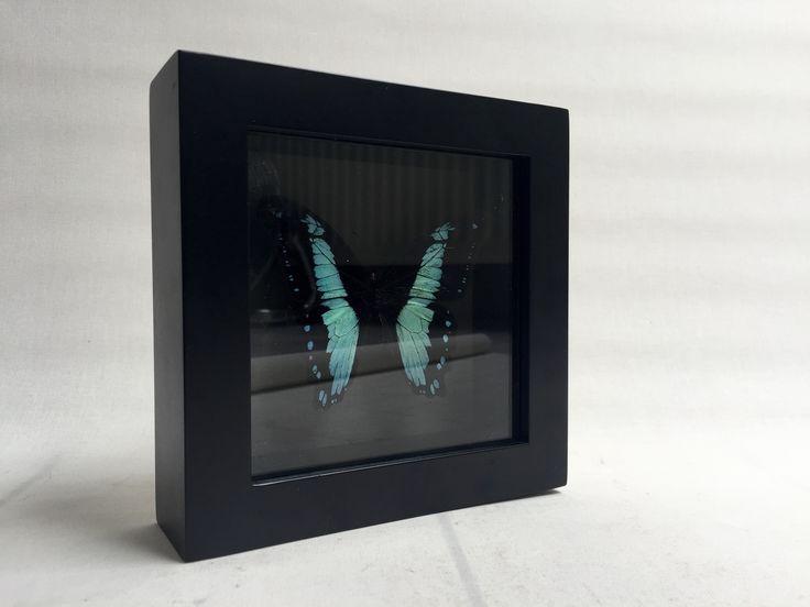 Brudante Framed Butterfly