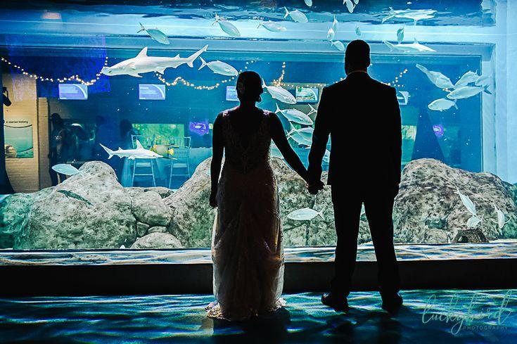 Rainy Aquarium Wedding in Toledo   Aquarium wedding, Groom ...