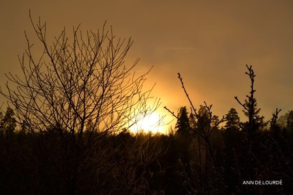 Sunset, Wednesday, 11th December 2013, view from the Garden.