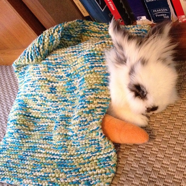 Bunny Eddie taking a nap with his carrot :)