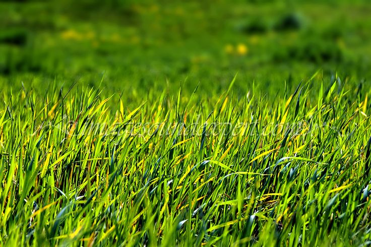 verde crud, primavara, iarba, fresh green, spring, grass, frisch grun, fruhling, gras, vert frais, ressort, herbe,