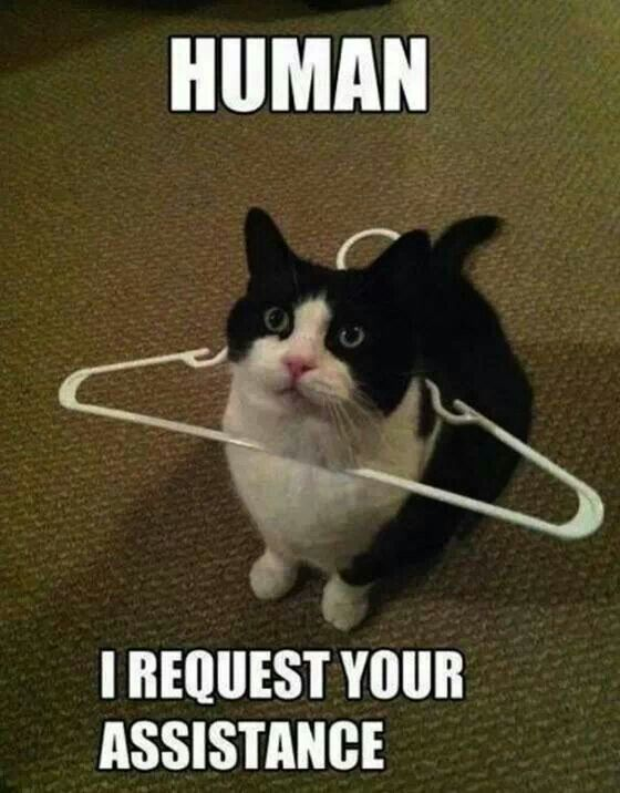 Funny cat #meme #cute #cat  -- see more at cat lovers community fanpage