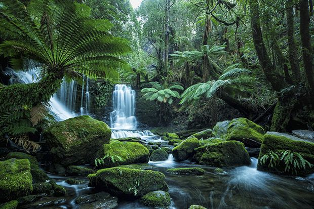 Tasmania, with its ancient rainforests, windswept coastline and rugged mountain ranges is a paradise for landscape photographers. In this special feature, professional photographer and regular Apple Isle visitor Alfonso Calero names his five favourit