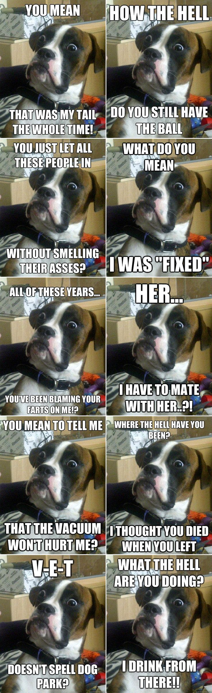 funny picture boxer