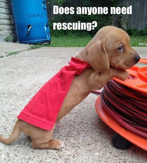 does anyone need rescuing?
