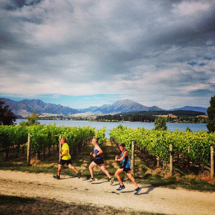 Running through Rippon Vineyard in the Challenge Wanaka Fun Run 2014