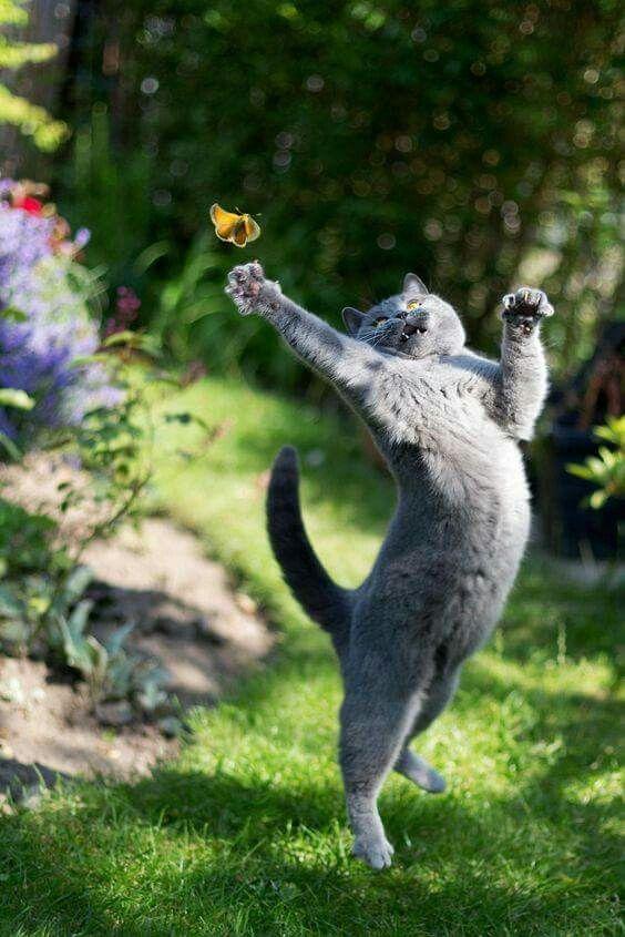 animalbuzzerstore.coml www.animalbuzzerstore.comlhttp://animalbuzzerstore.comlhttp://animalbuzzerstore.com