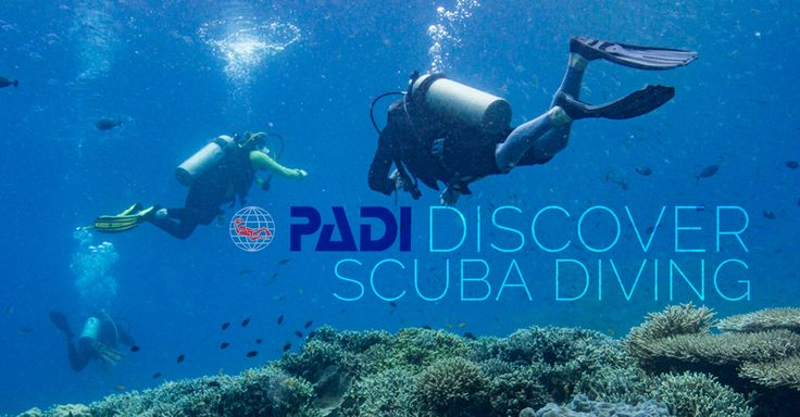 Learn To Dive Today! Are you ready to take the plunge and learn to scuba dive? Well, you've come to the right place. As a PADI Instructor, I have taught hundreds of students to scuba dive and I&