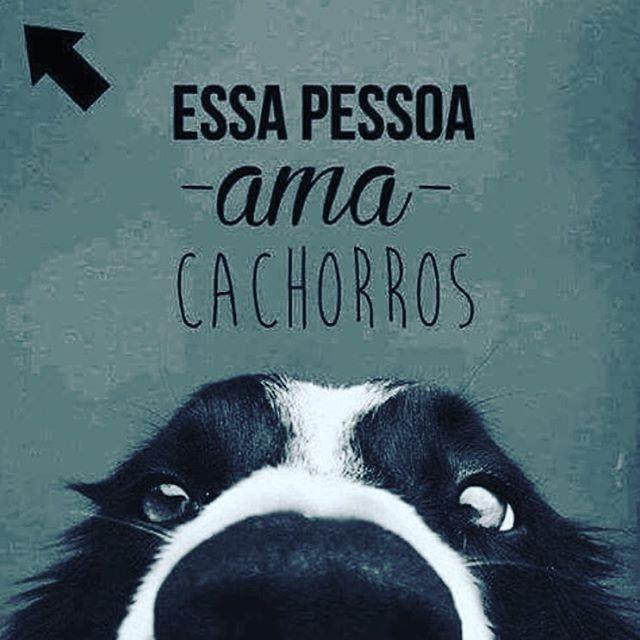EU AMO!!!<3 #petmeupet #cachorro #amocachorro