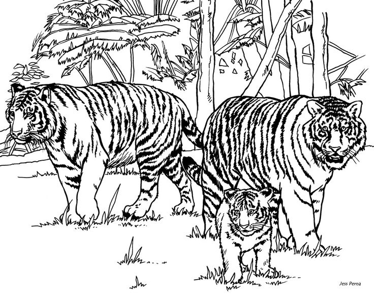 Intricate Cat Coloring Pages : Intricate cat coloring pages for adults tiger