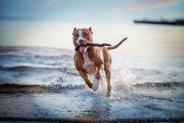 Relieve dry and itchy skin and reduce shedding, providing advanced support for a glossy, silky coat, with regular supplementation of quality Omega 3 for dogs. #dogs #dogshealth #pets