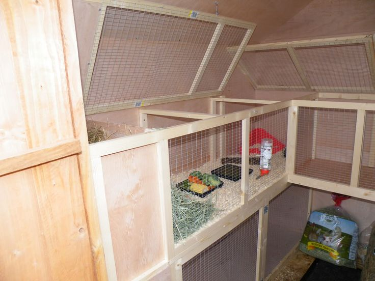 316 best images about guinea pig room on pinterest cavy