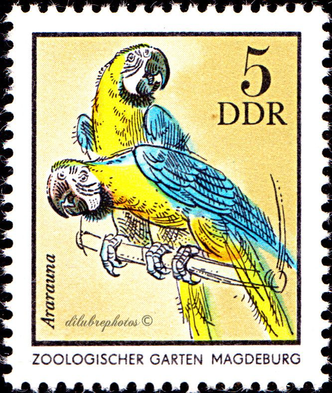Ideal German Democratic Republic German Zoological Gardens BLUE u YELLOW MACAES MAGDEBURG ZOO