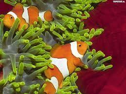 Znalezione obrazy dla zapytania ryby morskie