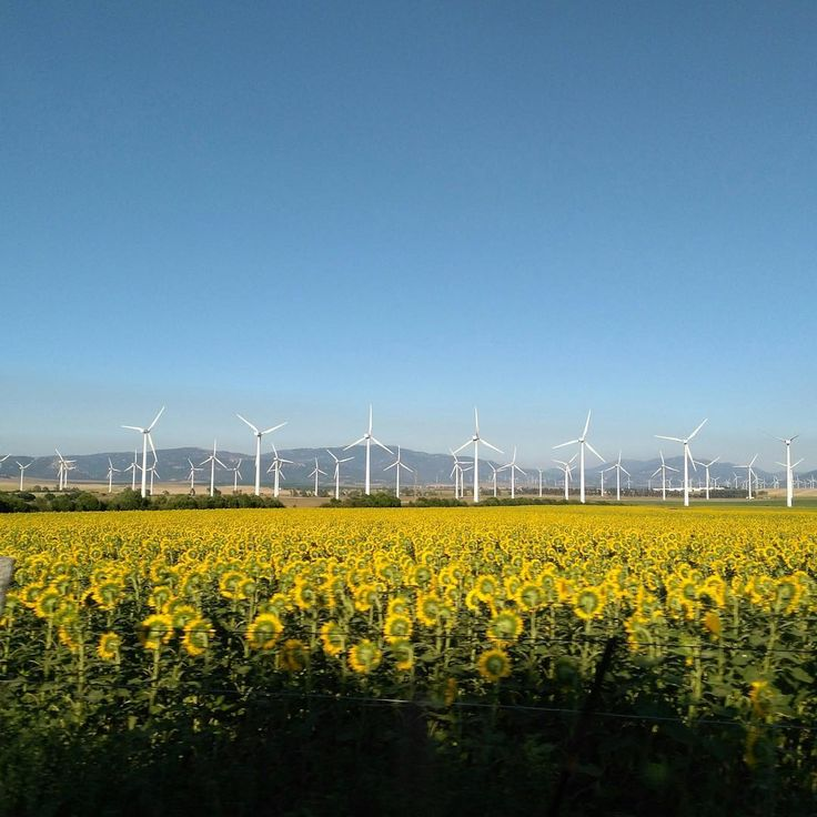 We may be Solar Us Shop but were big fans (get it?) of wind energy. This week well be blowing you away  with wind energy facts! Okay thats all the wind puns weve got!