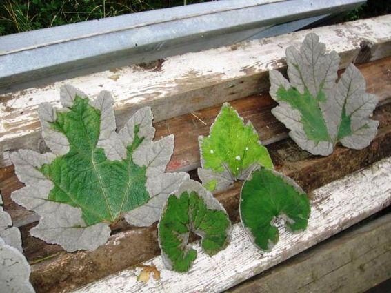 Jill  Waltenspiel's hypertufa leafcastings  12 hypertufa projects