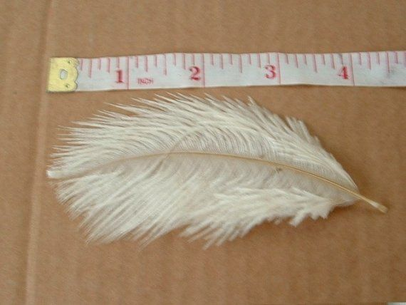 Lot of 10 Baby Ostrich Feathers  Champagne by simplysilverbyheena, $6.00