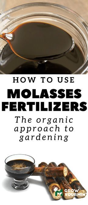 What Is Molasses Fertilizer And How To Use Them #garden#growyourmint.com