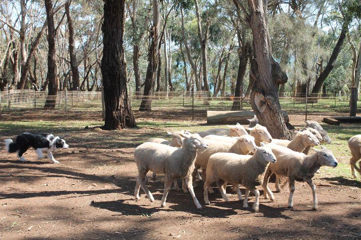 Churchill Island and Farm