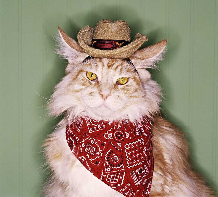 Country Western Cat | Country & Western Music | Pinterest