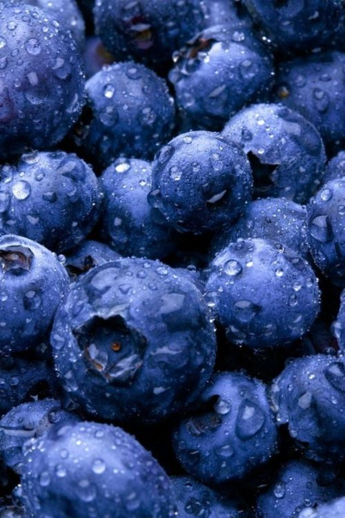 nezart design: Wine Recipes, Fruit, Blue Berries, Tasti Recipes, Health Benefits, Colors Blue, Blue Colors, Healthy Food, Blueberries