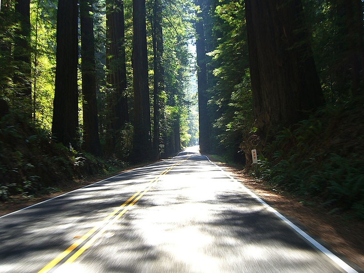11 best Northern California Activities images on Pinterest
