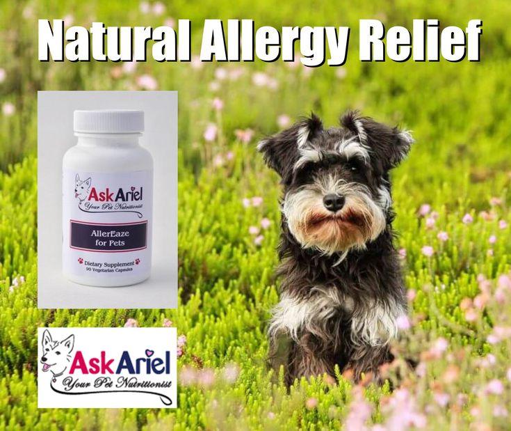 cat food allergy symptoms reddit