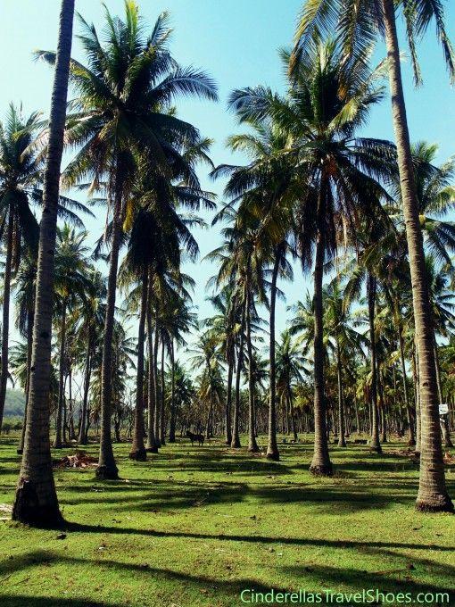 Palm trees in Gili Trawangan