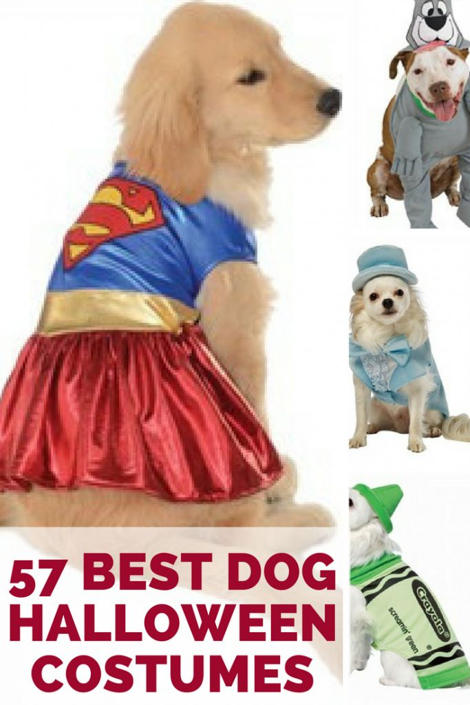 The best dog Halloween costumes for small and large dogs. Find cheap, funny, and cute Halloween costumes for dogs.