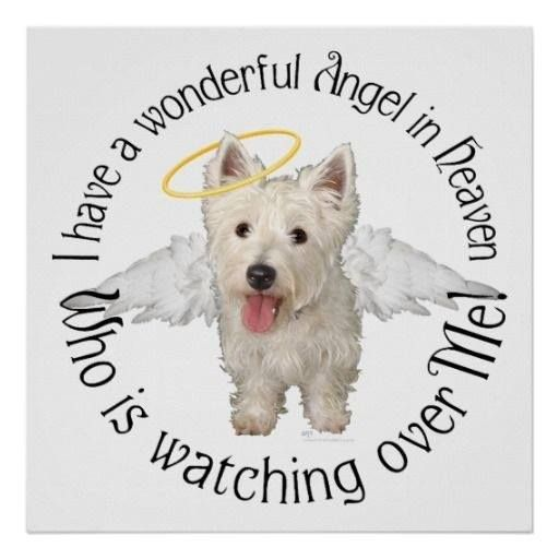 Dog Angel Quotes: I Have Five Angels In Heaven Watching Over Me.