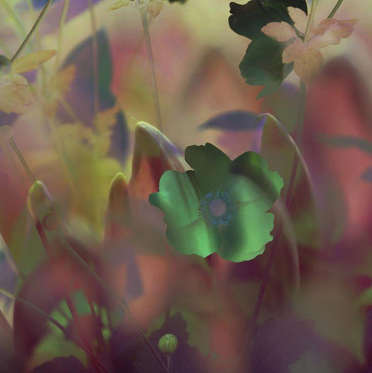 Night Anemone by Jenny Rainbow