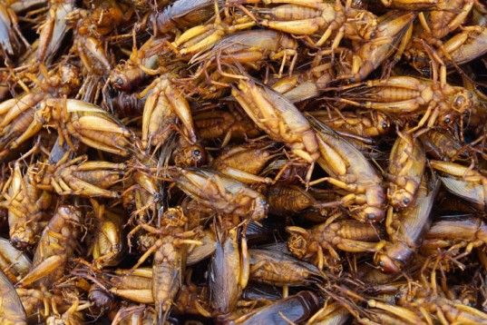 Inhabitat: UN Report Says We Should Be Eating More Bugs... unfortunately, don't think us westerners can get over the barf factor.