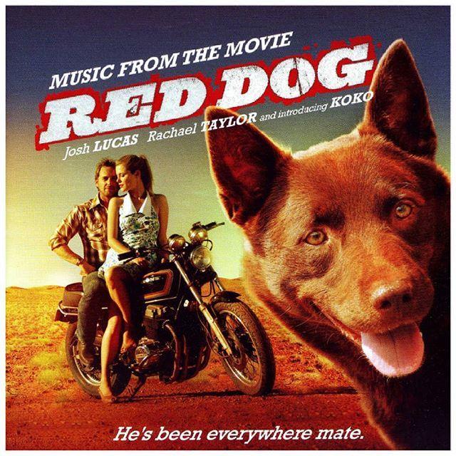 Cão Vermelho ( Red Dog), de 2011.  Baseado em uma história real. Um cachorro de todos, mas de ninguém em particular. Até ele encontrar seu verdadeiro dono!  Prepare-se para rir e chorar.  #RedDog  #cãovermelho #caovermelho #joshlucas #Rachaeltaylor #Filme #filmedecachorro #Cachorro #PipocaComBacon