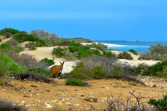 A la conquête de 3 territoires, Sydney dans la Nouvelle Galles du Sud , Darwin et ses parcs nationaux dans le Top End et la Warlu Way, dans le Pilbara.