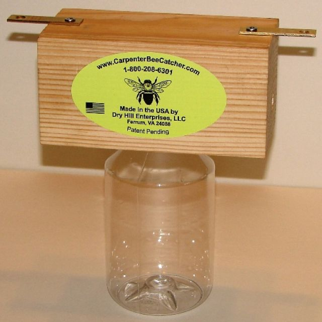Carpenter Bee Trap Bees Bugs Rodents Pinterest Bees