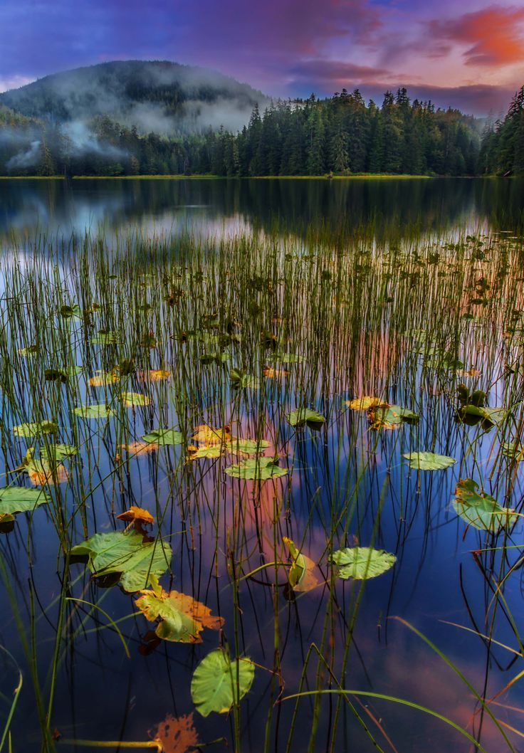 D Sunset at Ward lake in the Tongass National Forest after a passing rain storm.