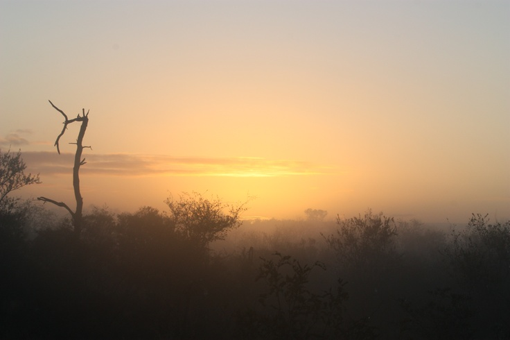 Safari - Mpumalanga, South Africa