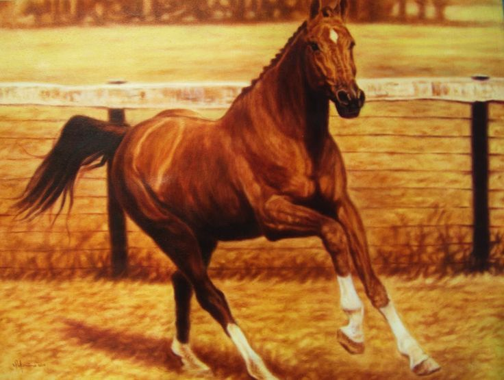 """Thoroughbred with White Socks"" Original Oil on Canvas by Yasiel Palomino Pérez 39"" x 31.5"" SOLD"