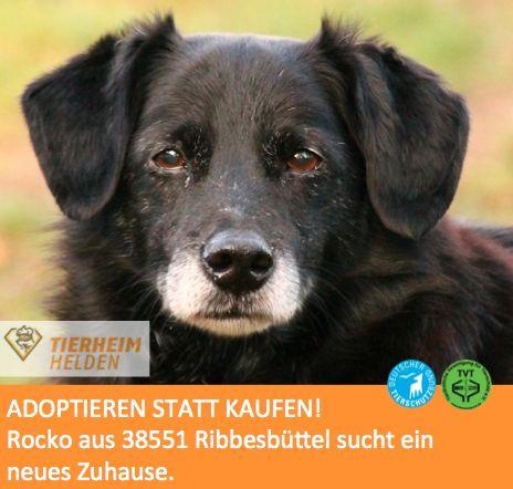 """Keine einzige negative Eigenschaft hat der kastrierte Rocko aus dem Tierheim Ribbesbüttel.  http://www.tierheimhelden.de/hund/tierheim-ribbesbuettel/rasse/rocko/6265-0/  Rocko ist der perfekte Anfängerhund. Er verträgt sich mit Artgenossen und anderen Tieren, freut sich über alles und kuschelt auch gerne. Eine kleine Schwäche ist seine Liebe zum Fressen. Aber bei entsprechend längeren Spaziergängen ist die """"Bikinifigur"""" in Reichweite."""