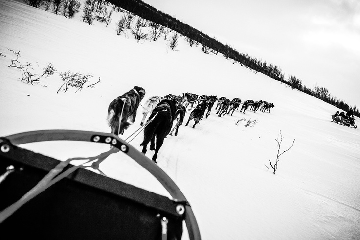 Dag Torulf Olsen is now training for the Iditarod-run, Alaska