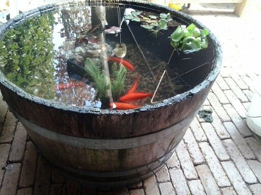 Mini vijver in de tuin pinterest gardens for Pond in a pot with fish