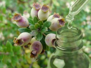 Αιθέριο Έλαιο Μύρο - Commiphora Myrrha