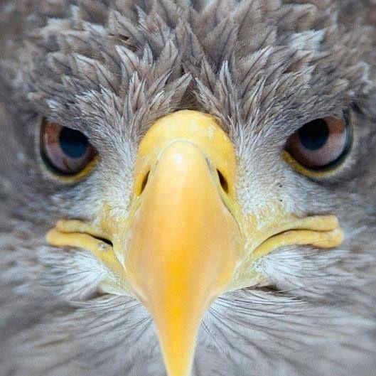 Eagle Eyes !IEC