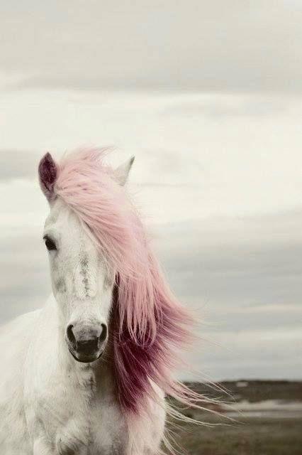 fluffy horses - photo #45